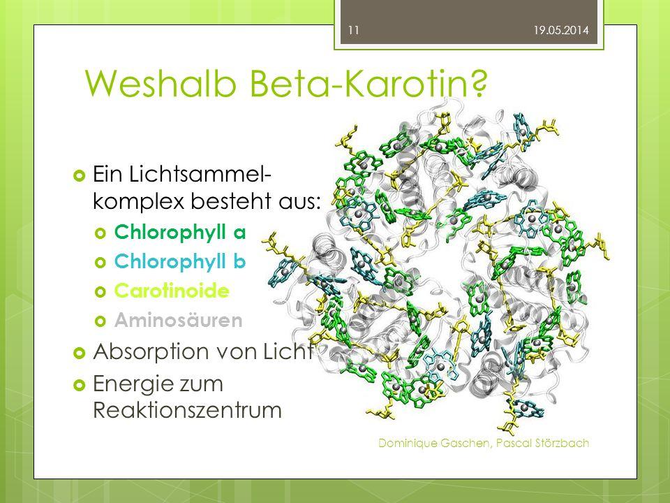 Weshalb Beta-Karotin? 19.05.2014 Dominique Gaschen, Pascal Störzbach 11 Ein Lichtsammel- komplex besteht aus: Chlorophyll a Chlorophyll b Carotinoide