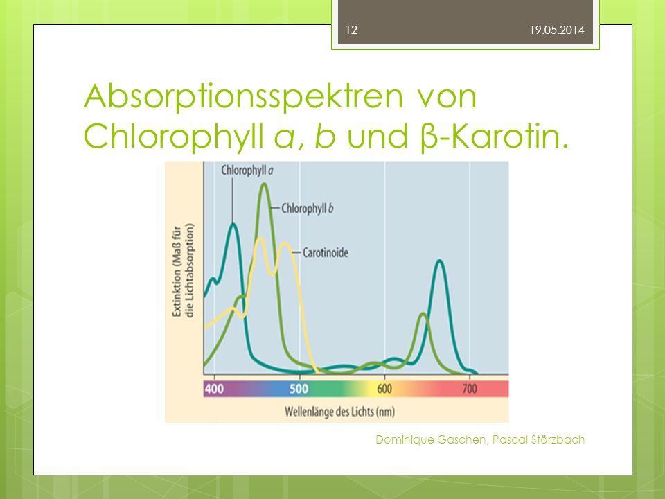 Absorptionsspektren von Chlorophyll a, b und β-Karotin. 19.05.2014 Dominique Gaschen, Pascal Störzbach 12