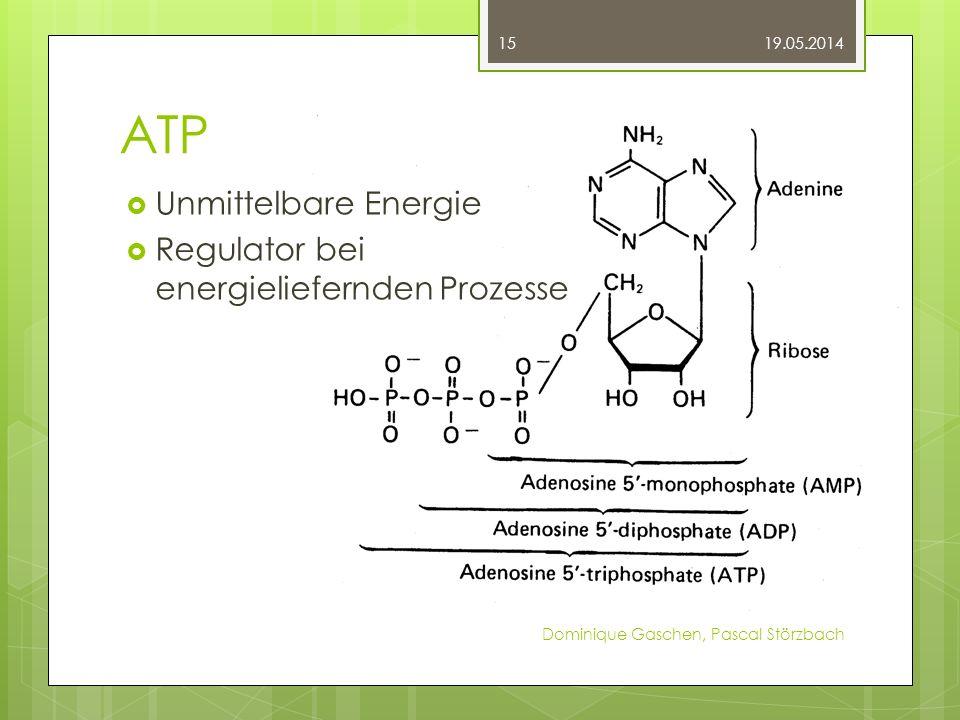 ATP Unmittelbare Energie Regulator bei energieliefernden Prozesse 19.05.2014 Dominique Gaschen, Pascal Störzbach 15