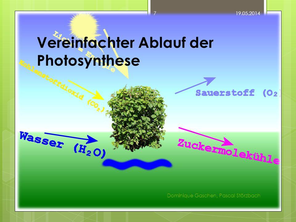 Vereinfachter Ablauf der Photosynthese 19.05.2014 Dominique Gaschen, Pascal Störzbach 7