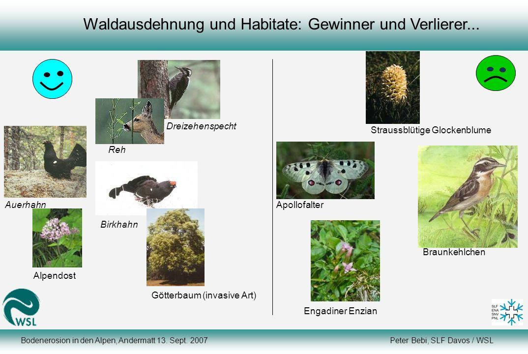 Waldausdehnung und Habitate: Gewinner und Verlierer... Reh Birkhahn Dreizehenspecht Götterbaum (invasive Art) Alpendost Auerhahn Braunkehlchen Apollof
