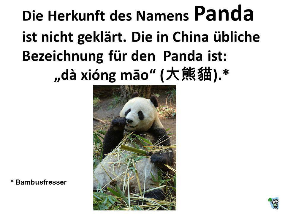 Der Panda ist eine Säugetierart aus der Familie der Bären.