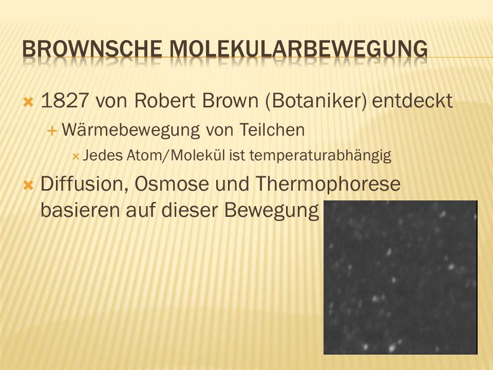 1827 von Robert Brown (Botaniker) entdeckt Wärmebewegung von Teilchen Jedes Atom/Molekül ist temperaturabhängig Diffusion, Osmose und Thermophorese ba