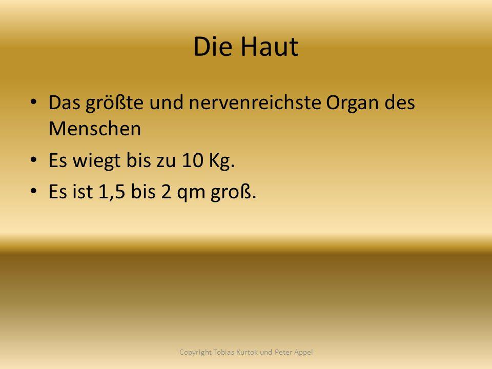 Die Haut Das größte und nervenreichste Organ des Menschen Es wiegt bis zu 10 Kg. Es ist 1,5 bis 2 qm groß. Copyright Tobias Kurtok und Peter Appel