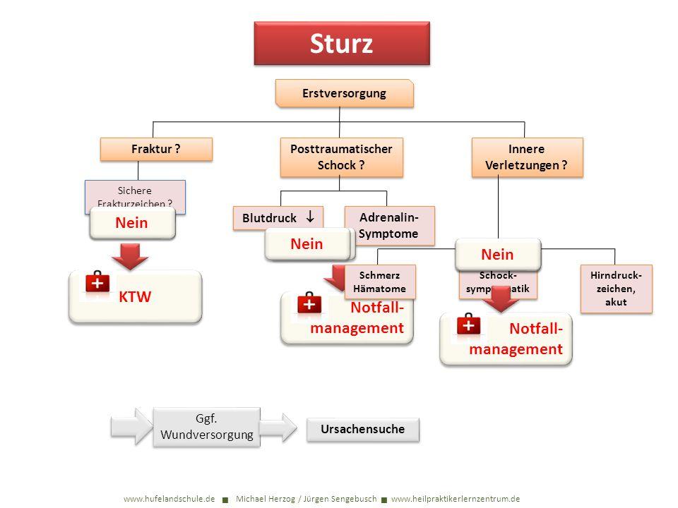 Sturz www.hufelandschule.de Michael Herzog / Jürgen Sengebusch www.heilpraktikerlernzentrum.de Erstversorgung Sichere Frakturzeichen ? Fraktur ? Postt