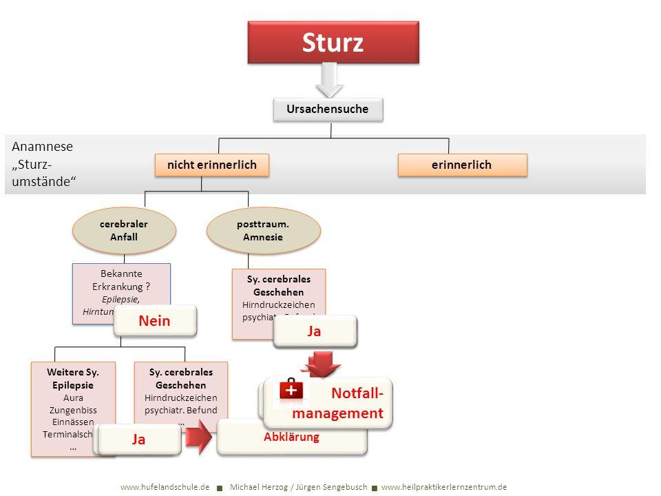 Sturz www.hufelandschule.de Michael Herzog / Jürgen Sengebusch www.heilpraktikerlernzentrum.de Bekannte Erkrankung ? Epilepsie, Hirntumor, Sucht… Weit
