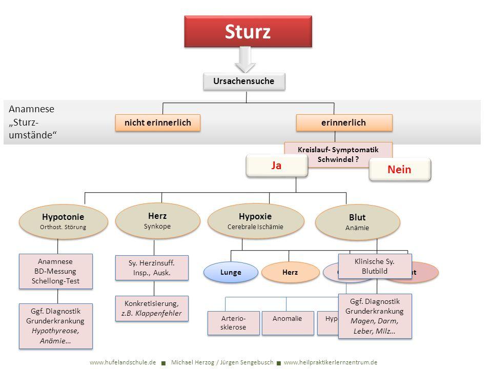 Sturz www.hufelandschule.de Michael Herzog / Jürgen Sengebusch www.heilpraktikerlernzentrum.de Ursachensuche Anamnese Sturz- umstände nicht erinnerlich erinnerlich Kreislauf- Symptomatik Schwindel .
