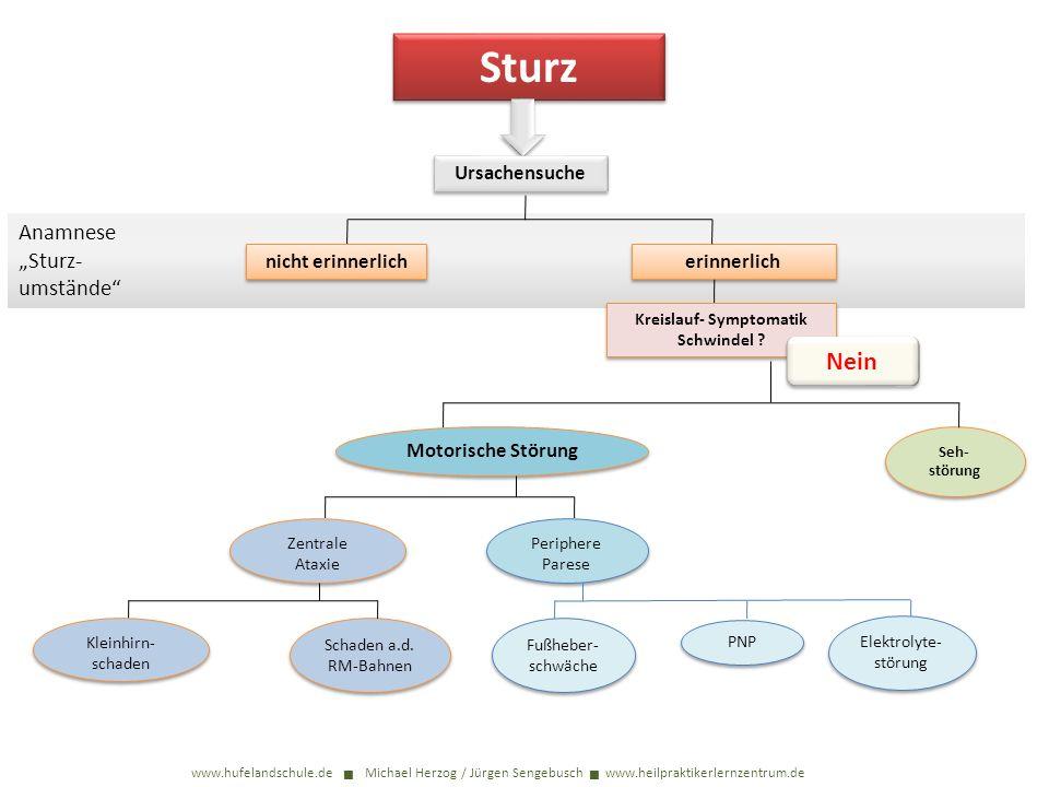 Sturz www.hufelandschule.de Michael Herzog / Jürgen Sengebusch www.heilpraktikerlernzentrum.de Ursachensuche Anamnese Sturz- umstände nicht erinnerlic