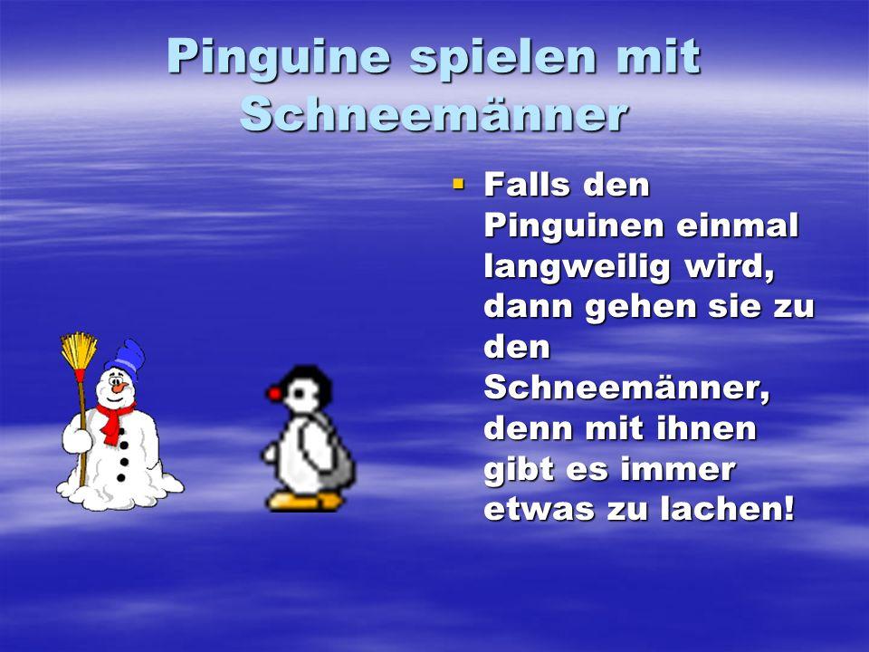Pinguine spielen mit Schneemänner Falls den Pinguinen einmal langweilig wird, dann gehen sie zu den Schneemänner, denn mit ihnen gibt es immer etwas z
