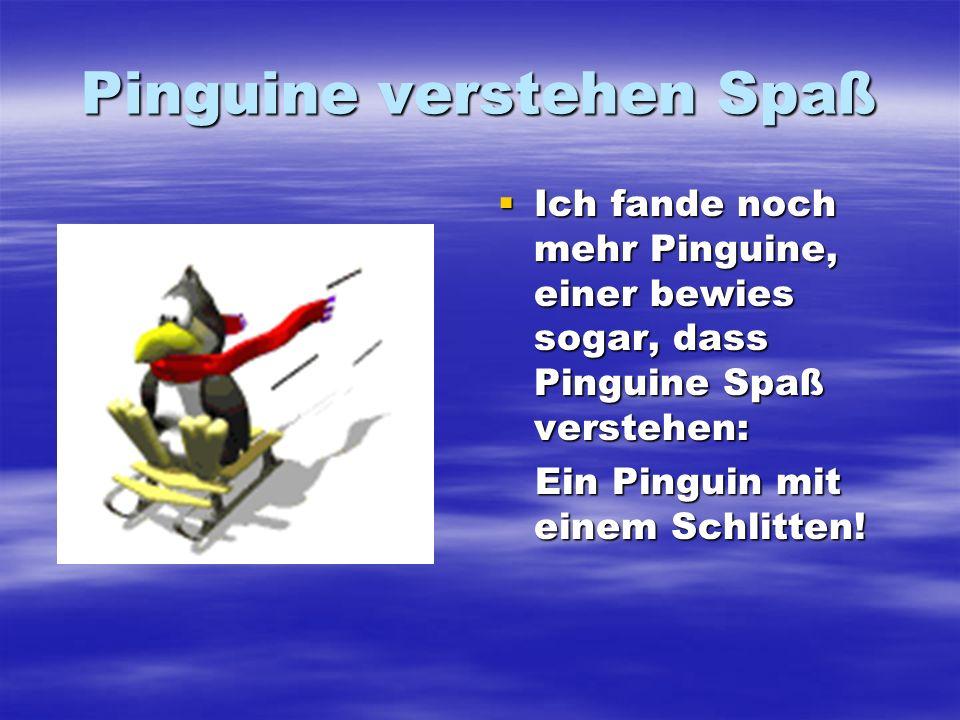 Pinguine verstehen Spaß Ich fande noch mehr Pinguine, einer bewies sogar, dass Pinguine Spaß verstehen: Ich fande noch mehr Pinguine, einer bewies sog