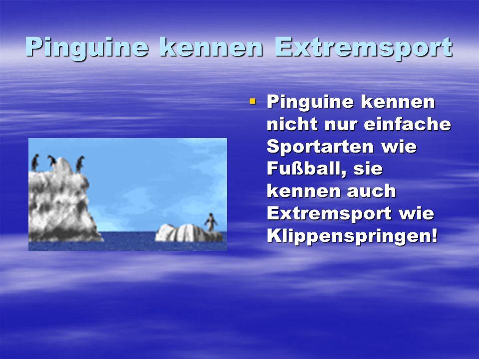 Pinguine kennen Extremsport Pinguine kennen nicht nur einfache Sportarten wie Fußball, sie kennen auch Extremsport wie Klippenspringen! Pinguine kenne