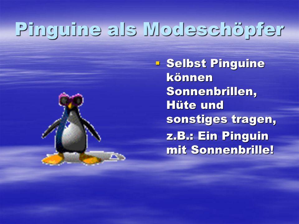 Pinguine als Modeschöpfer Selbst Pinguine können Sonnenbrillen, Hüte und sonstiges tragen, Selbst Pinguine können Sonnenbrillen, Hüte und sonstiges tr