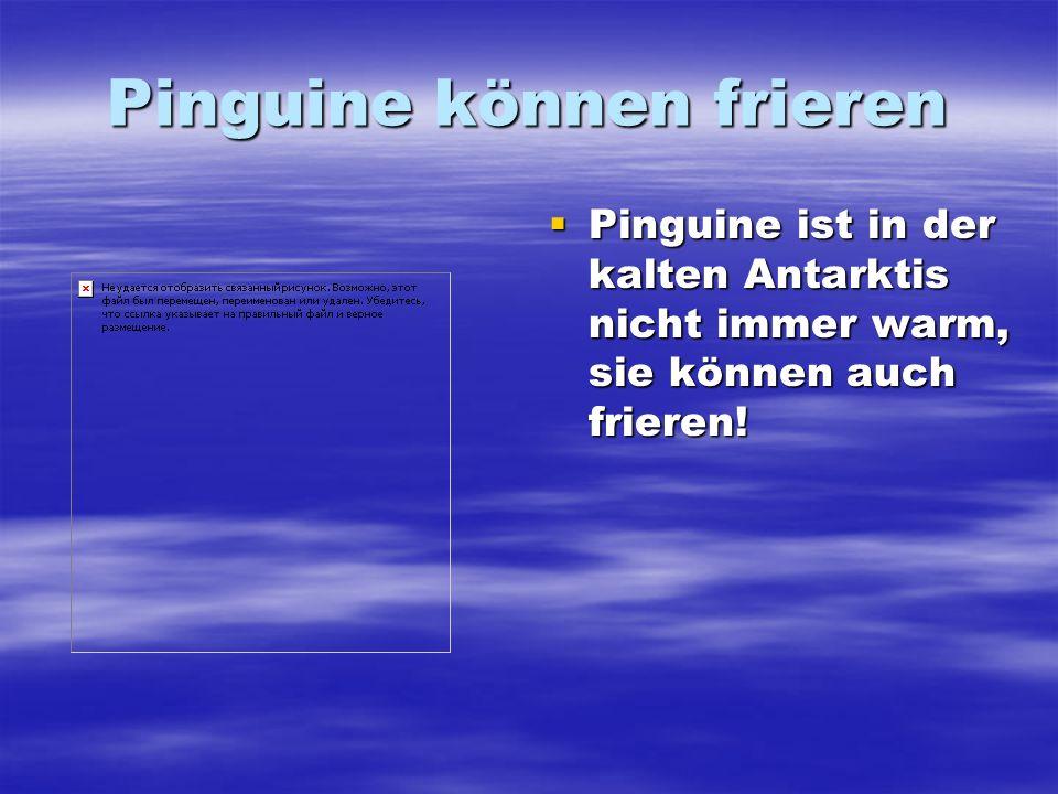 Pinguine können frieren Pinguine ist in der kalten Antarktis nicht immer warm, sie können auch frieren! Pinguine ist in der kalten Antarktis nicht imm