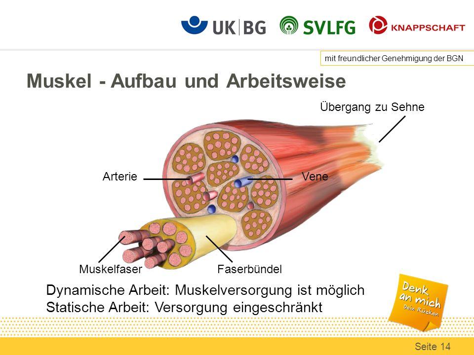 Muskel - Aufbau und Arbeitsweise Faserbündel Arterie Vene Muskelfaser Übergang zu Sehne Dynamische Arbeit: Muskelversorgung ist möglich Statische Arbeit: Versorgung eingeschränkt mit freundlicher Genehmigung der BGN Seite 14