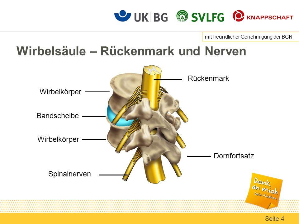Wirbelsäule – Rückenmark und Nerven Rückenmark Bandscheibe Spinalnerven mit freundlicher Genehmigung der BGN Seite 4 Wirbelkörper Dornfortsatz