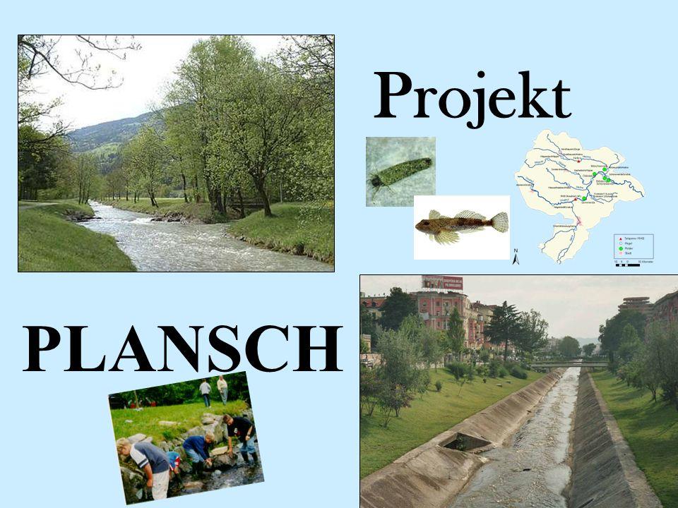PLANSCH Projekt