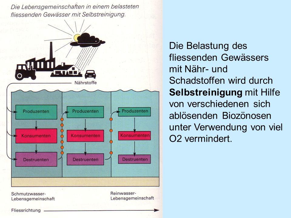 Die Belastung des fliessenden Gewässers mit Nähr- und Schadstoffen wird durch Selbstreinigung mit Hilfe von verschiedenen sich ablösenden Biozönosen unter Verwendung von viel O2 vermindert.