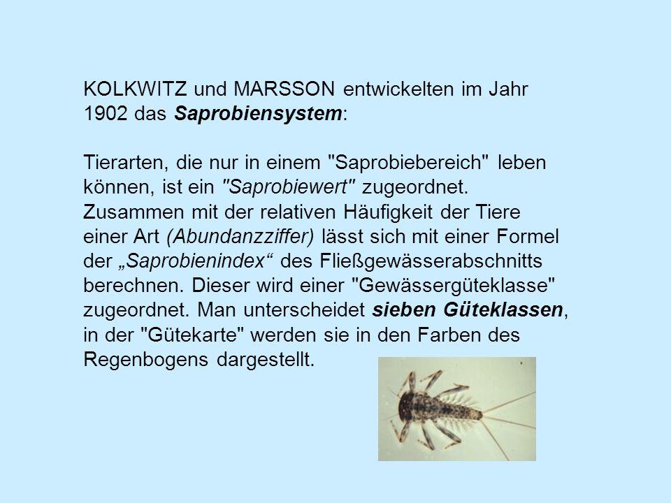 KOLKWITZ und MARSSON entwickelten im Jahr 1902 das Saprobiensystem: Tierarten, die nur in einem Saprobiebereich leben können, ist ein Saprobiewert zugeordnet.