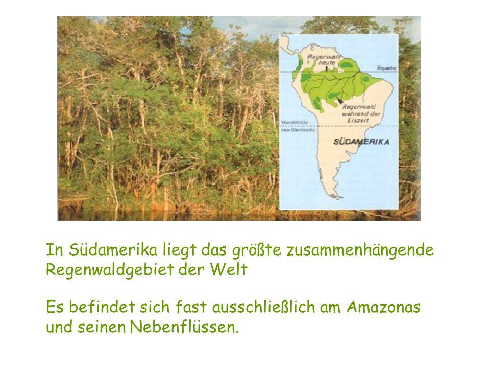 Verteilung der tropischen Regenwälder in der ganzen Welt Der tropische Regenwald wächst normalerweise überall dort, wo Temperaturen zwischen 20 – 28 G