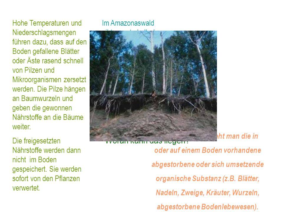 Als im 19. Jahrhundert Naturforscher wie Charles Darwin oder Alexander von Humboldt die Tropenwälder besuchten, staunten sie über die ungeheure Artenv