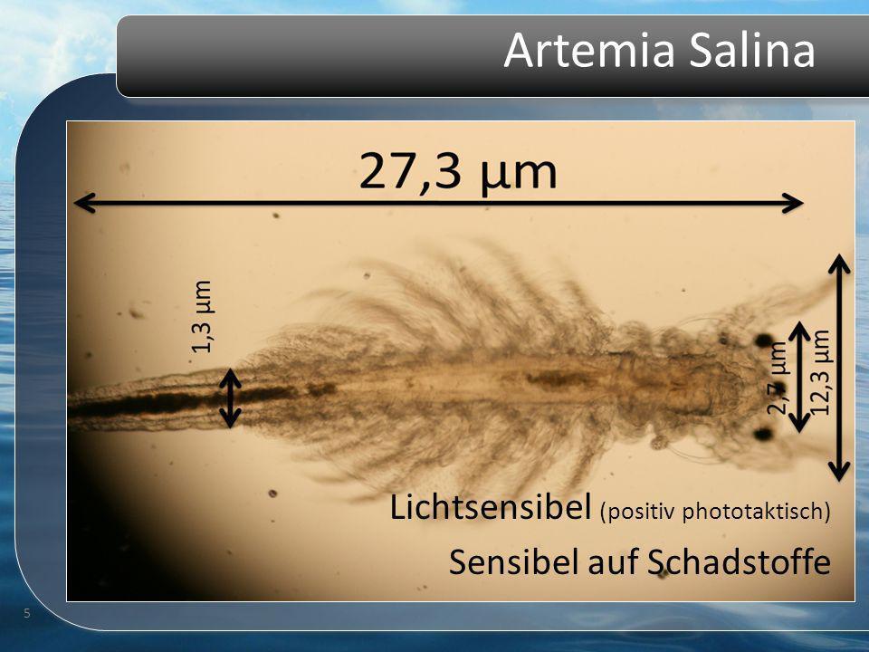 Artemia Salina 5 Lichtsensibel (positiv phototaktisch) Sensibel auf Schadstoffe