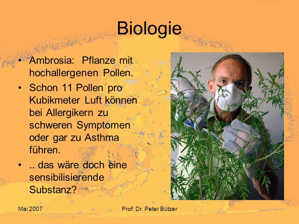 Mai 2007Prof. Dr. Peter Bützer Biologie Ambrosia: Pflanze mit hochallergenen Pollen. Schon 11 Pollen pro Kubikmeter Luft können bei Allergikern zu sch
