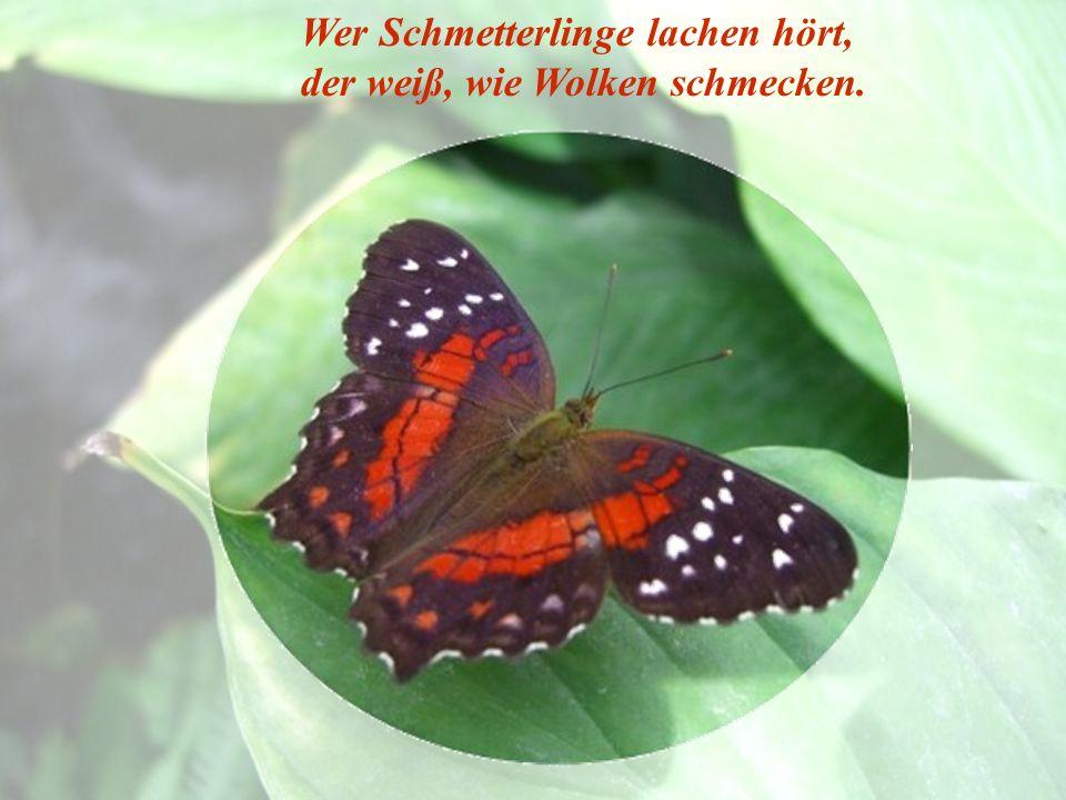 Wer Schmetterlinge lachen hört, der weiß, wie Wolken schmecken.