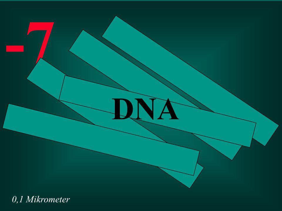 0,1 Mikrometer -7 DNA