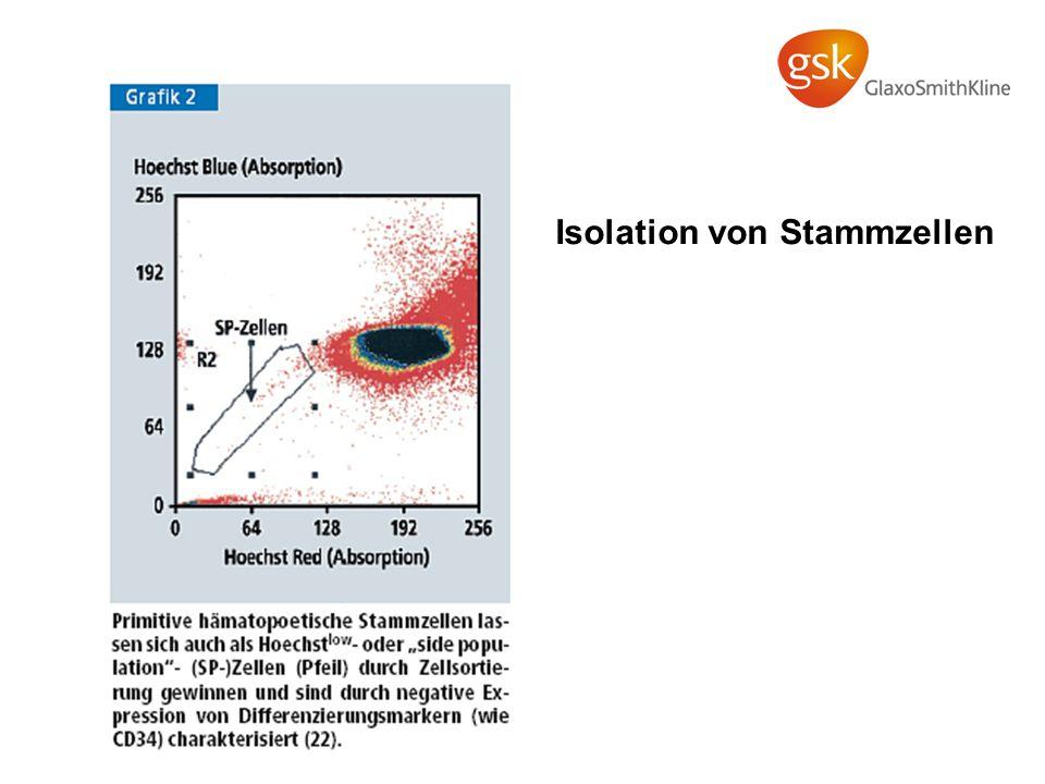 Isolation von Stammzellen
