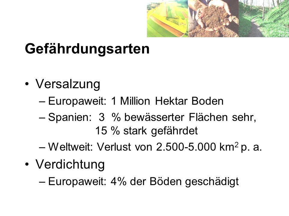 Gefährdungsarten Versalzung –Europaweit: 1 Million Hektar Boden –Spanien: 3 % bewässerter Flächen sehr, 15 % stark gefährdet –Weltweit: Verlust von 2.