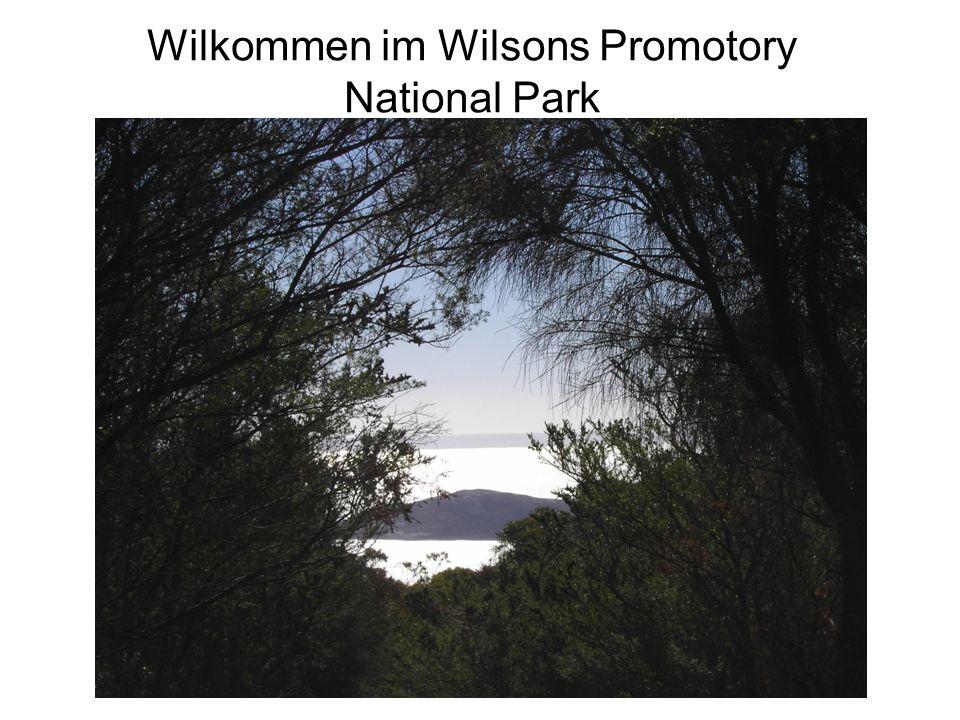 Wilkommen im Wilsons Promotory National Park