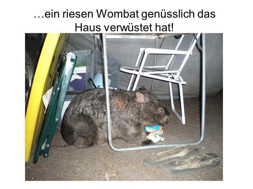 …ein riesen Wombat genüsslich das Haus verwüstet hat!