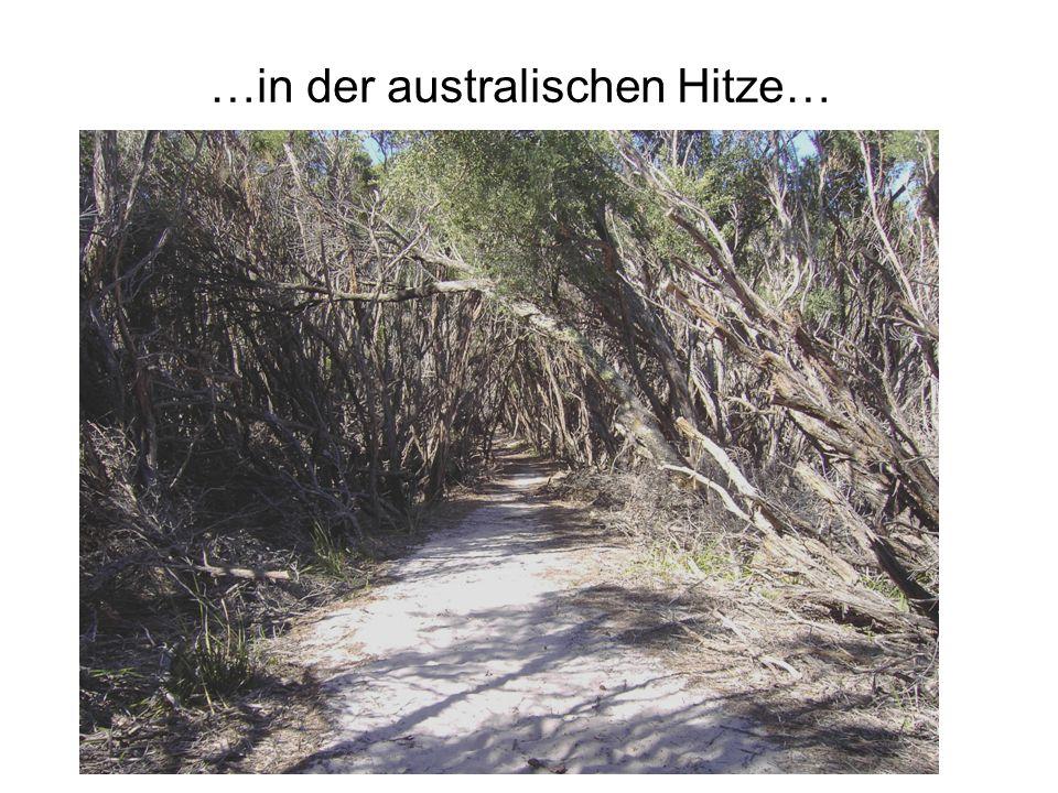 …in der australischen Hitze…