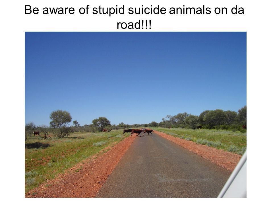 Be aware of stupid suicide animals on da road!!!