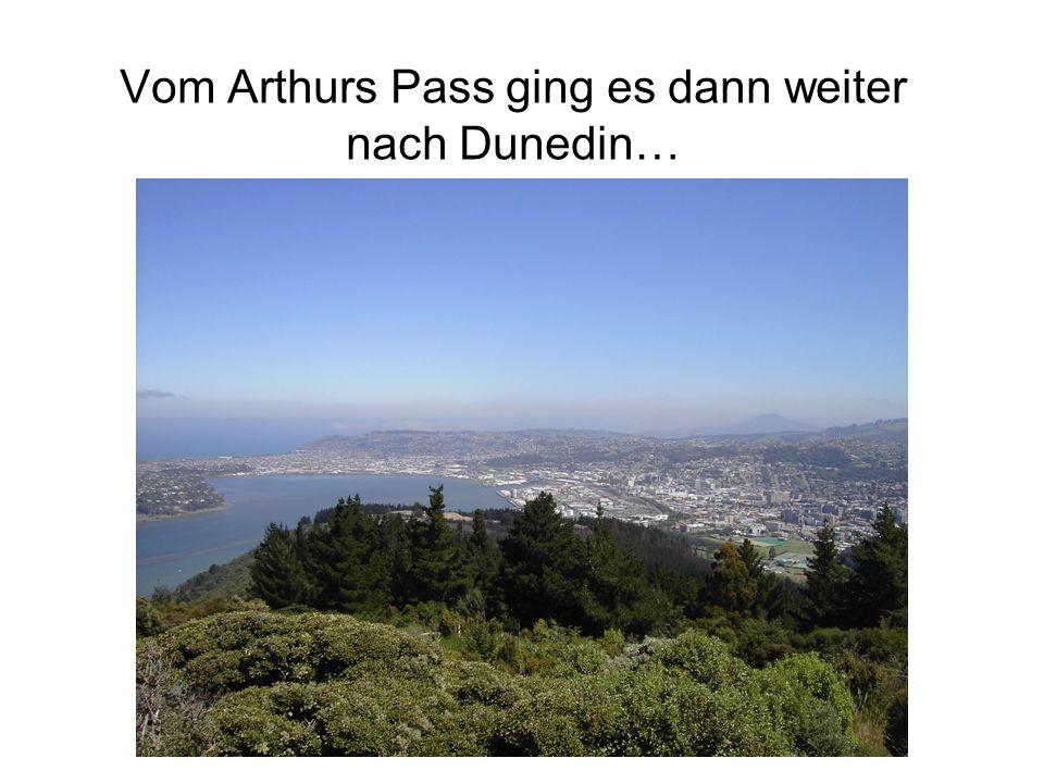 Vom Arthurs Pass ging es dann weiter nach Dunedin…