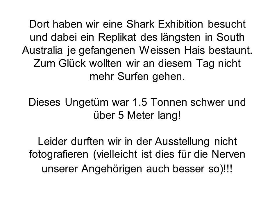 Dort haben wir eine Shark Exhibition besucht und dabei ein Replikat des längsten in South Australia je gefangenen Weissen Hais bestaunt.