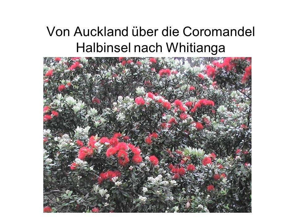 Von Auckland über die Coromandel Halbinsel nach Whitianga