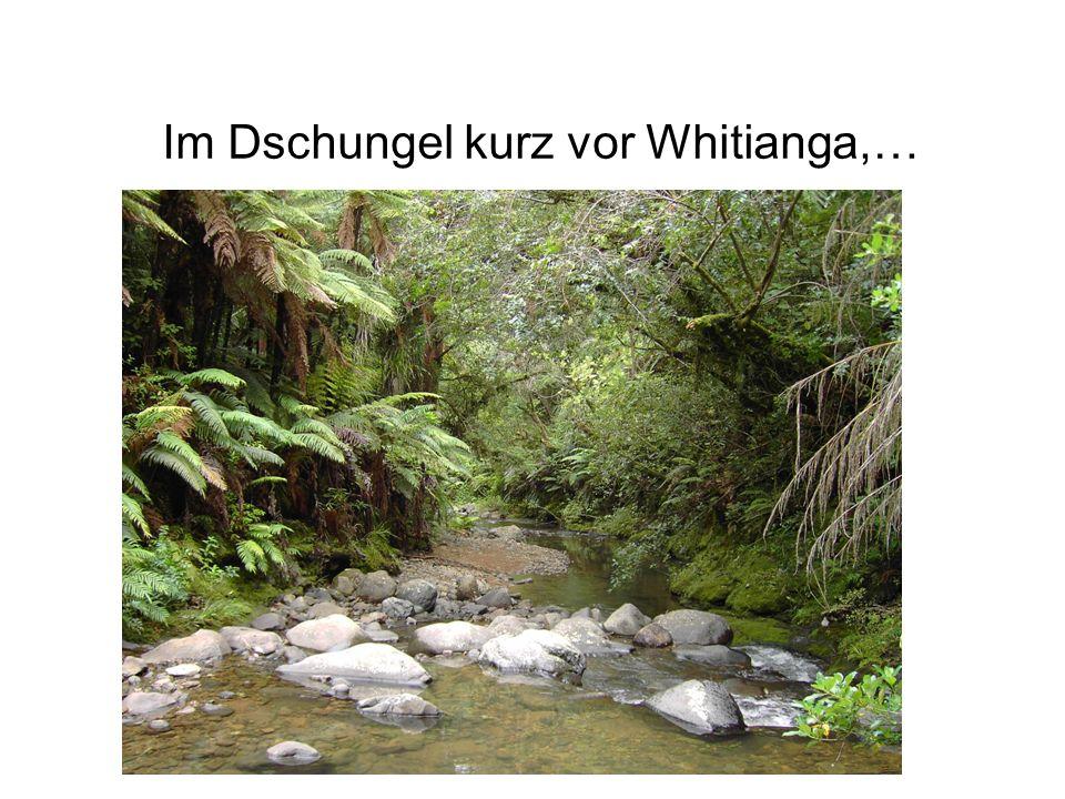 Im Dschungel kurz vor Whitianga,…