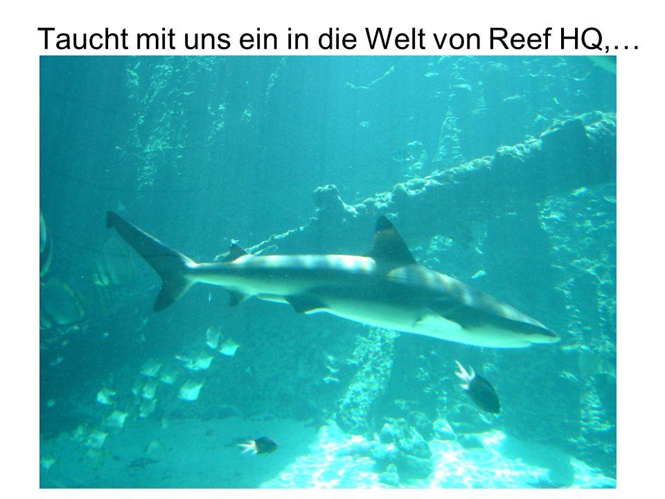 Taucht mit uns ein in die Welt von Reef HQ,…