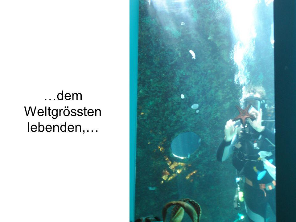 …Korallenriff in einem Aquarium.
