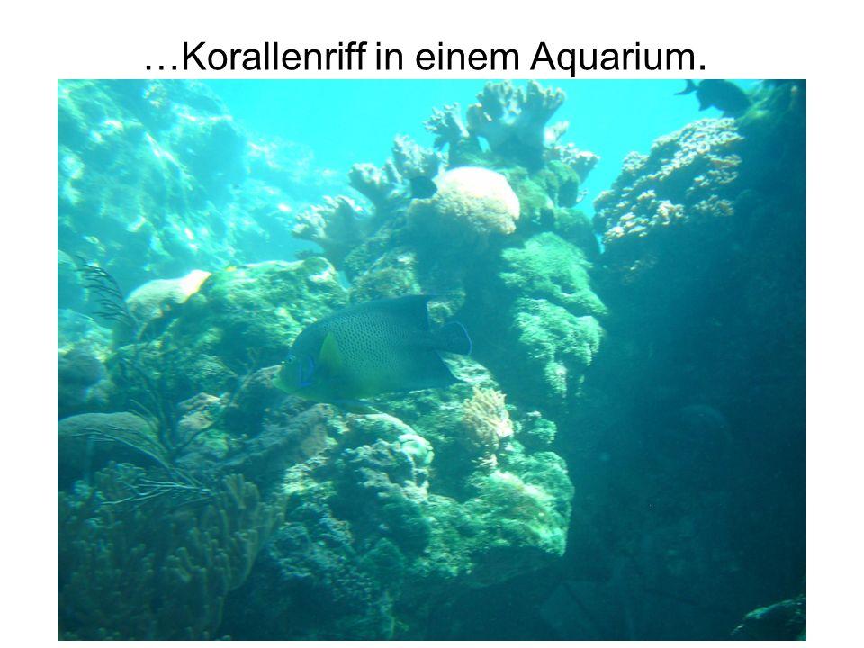 …Pelorus Island.
