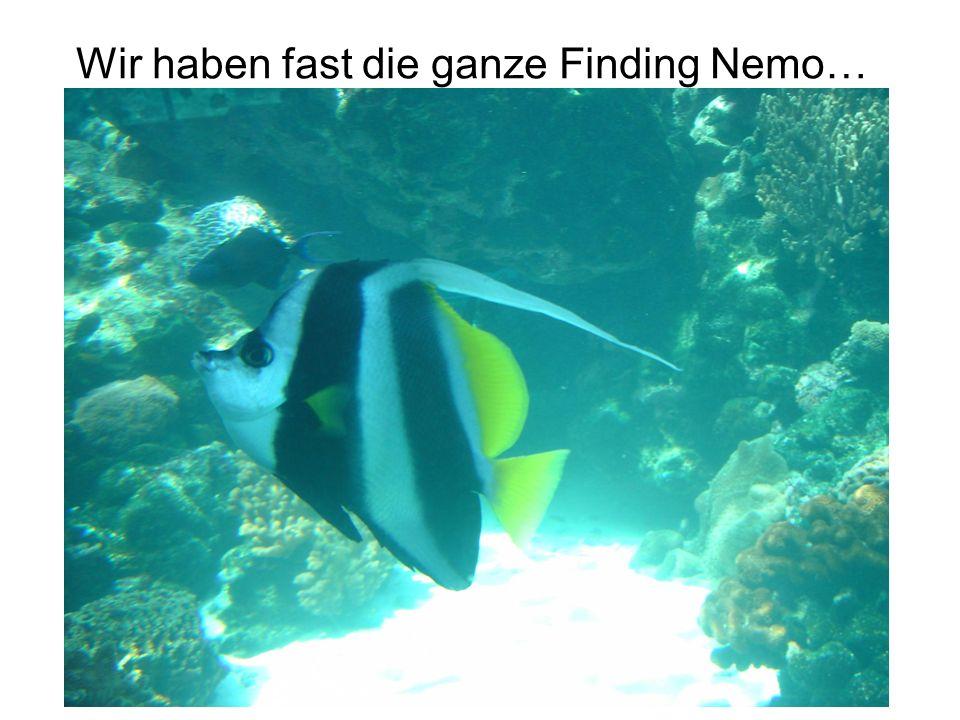 Wir haben fast die ganze Finding Nemo…