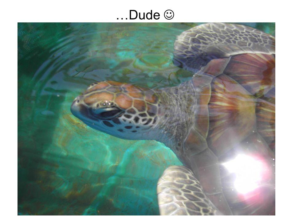 Die Unterwasserwelt…