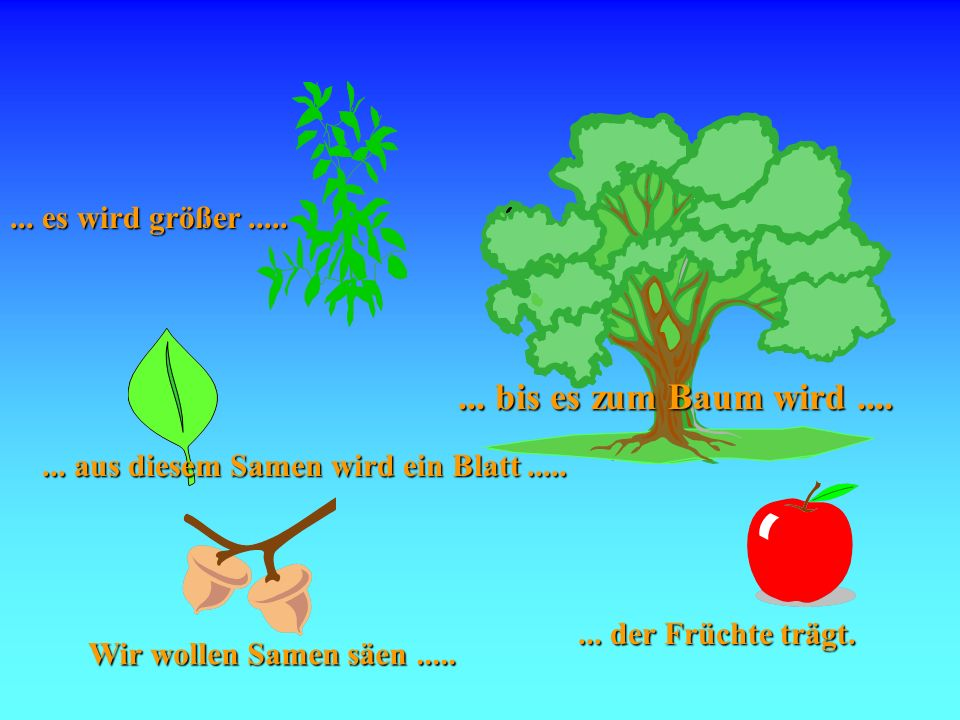 Samen Wir wollen Samen säen........ aus diesem Samen wird ein Blatt........ es wird größer........ der Früchte trägt.... bis es zum Baum wird....