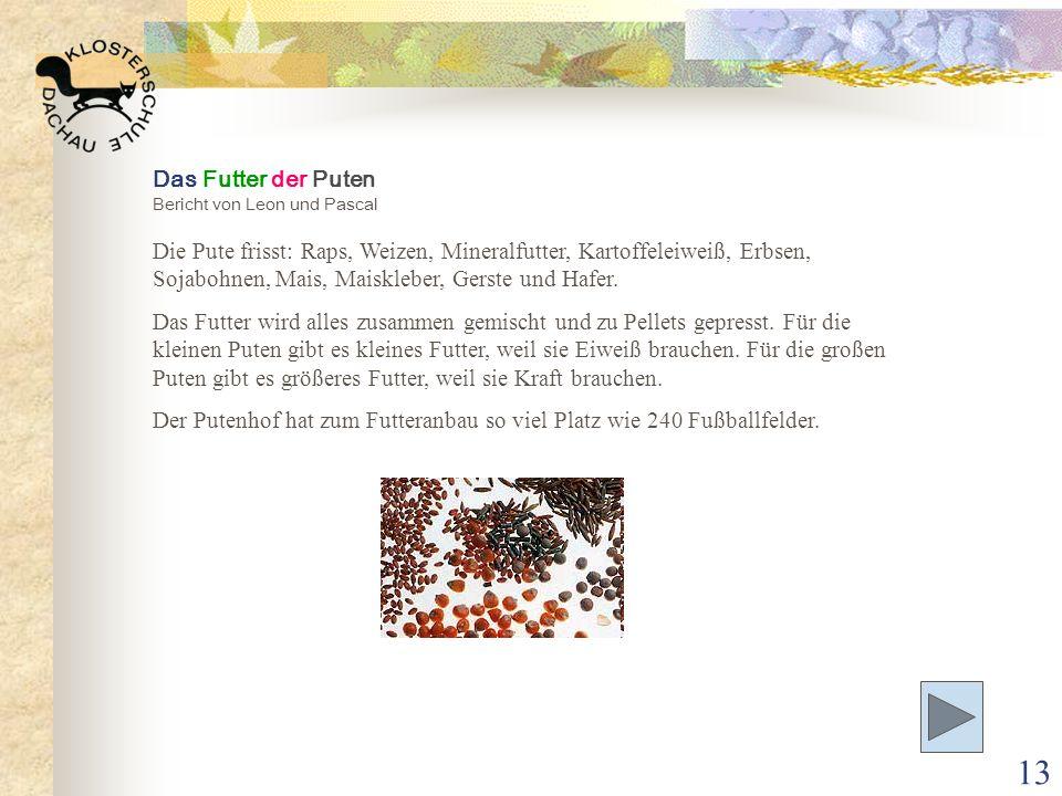 13 Das Futter der Puten Bericht von Leon und Pascal Die Pute frisst: Raps, Weizen, Mineralfutter, Kartoffeleiweiß, Erbsen, Sojabohnen, Mais, Maisklebe