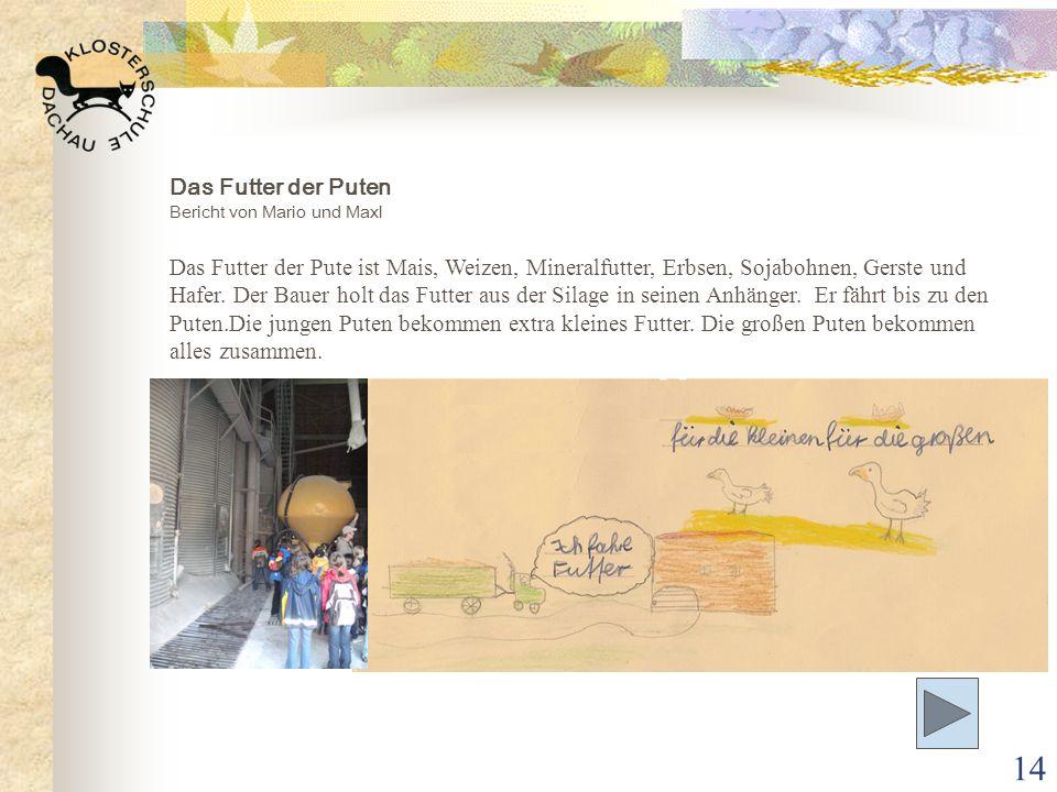 14 Das Futter der Puten Bericht von Mario und Maxl Das Futter der Pute ist Mais, Weizen, Mineralfutter, Erbsen, Sojabohnen, Gerste und Hafer. Der Baue