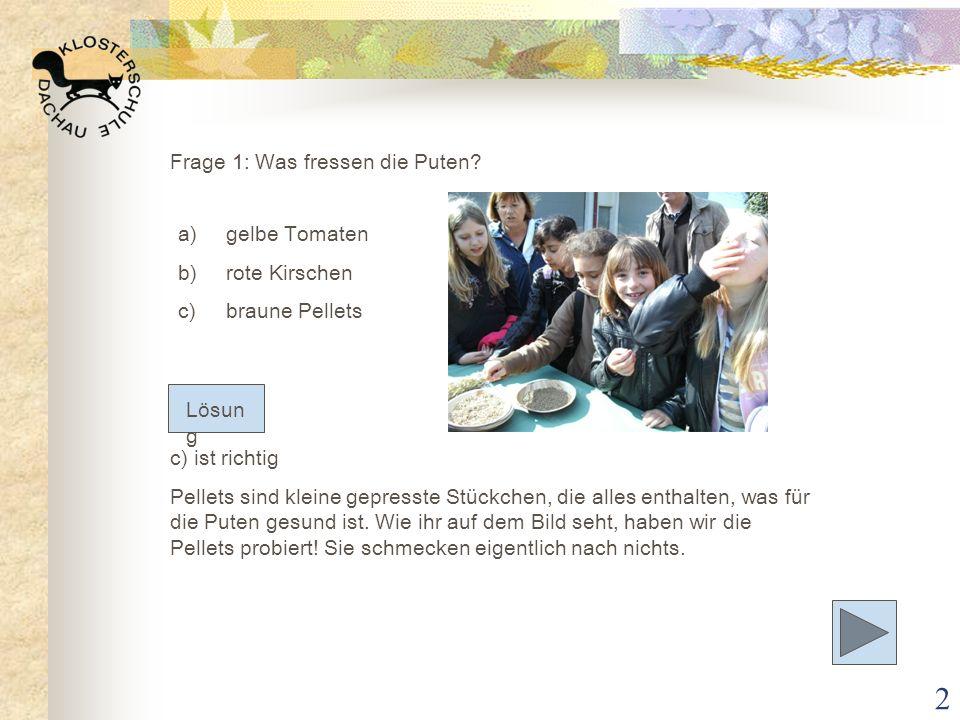 3 Frage 2: Aus was werden Pellets hergestellt.