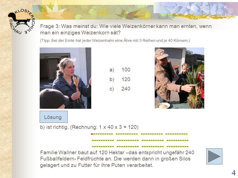 4 Frage 3: Was meinst du: Wie viele Weizenkörner kann man ernten, wenn man ein einziges Weizenkorn sät? (Tipp: Bei der Ernte hat jeder Weizenhalm eine
