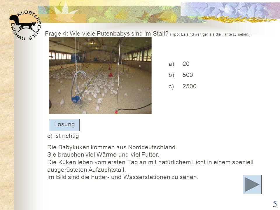 5 Frage 4: Wie viele Putenbabys sind im Stall? (Tipp: Es sind weniger als die Hälfte zu sehen.) a)20 b)500 c)2500 c) ist richtig Die Babyküken kommen