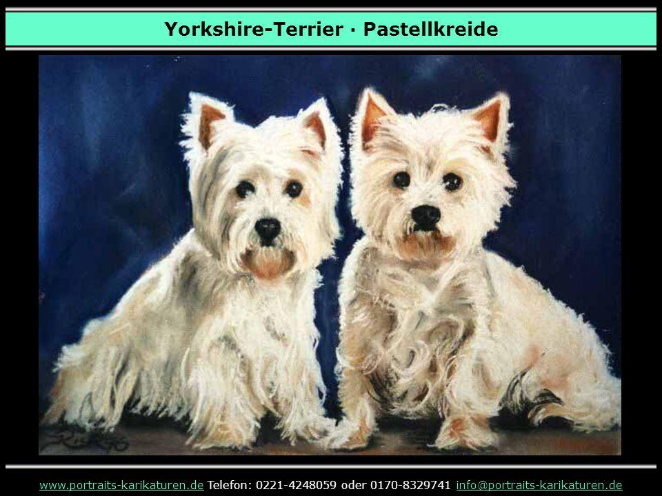 Yorkshire-Terrier · Pastellkreide www.portraits-karikaturen.dewww.portraits-karikaturen.de Telefon: 0221-4248059 oder 0170-8329741 info@portraits-karikaturen.deinfo@portraits-karikaturen.de